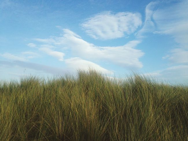 The Grass Is Green Blue Sky Scotland Nature VSCO Vscocam Spring Into Spring