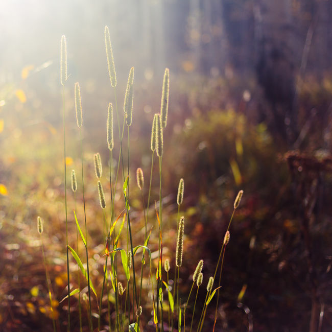 Autumn Autumn Colors Beauty In Nature Bokeh Close-up Colorado Fall Fall Beauty Fall Colors Focus On Foreground Grass Growth Nature Outdoors Plant Selective Focus Stem Uncultivated