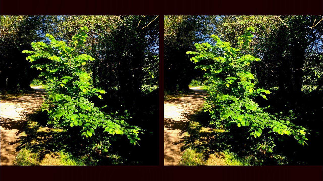 3D Crosseyes 3D En Louchant Nature Sur Les Chemins En Balade Au Bord De L'eau Arbre Tree Sur Le Chemin
