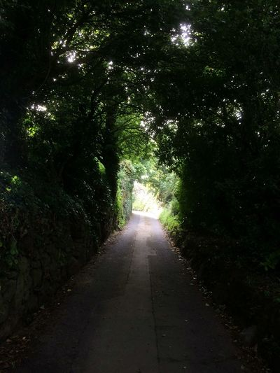 Green lane Guernsey St Saviours Channel Islands Tourism Island Holiday Destination Travel The Way Forward Diminishing Perspective Tree Vanishing Point Road Tranquility Nature Empty Road Green Long Outdoors Tranquil Scene Day Shadows Country Road Empty Beauty In Nature