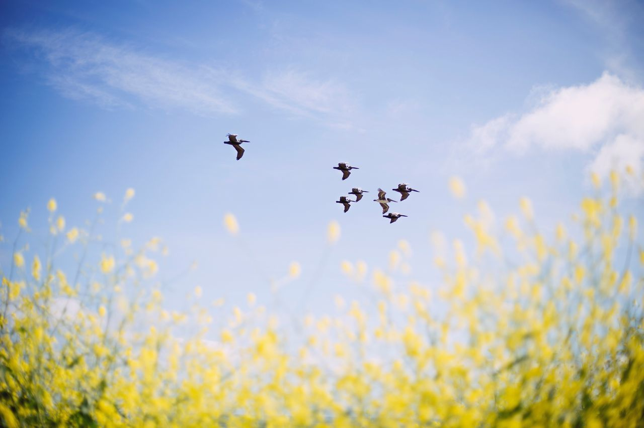 Flying Animal Themes Animals In The Wild Sky Nature Low Angle View Bird No People Beauty In Nature Day Outdoors Flower Large Group Of Animals Birds Flying High Flying Birds