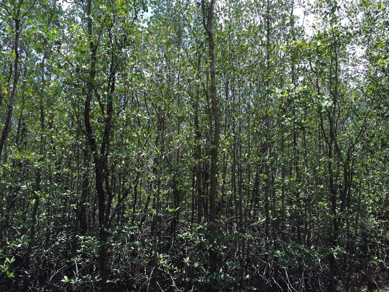 Mangrove Forest Mangroves Nature's Diversities Nature Photography Outdoor Pictures