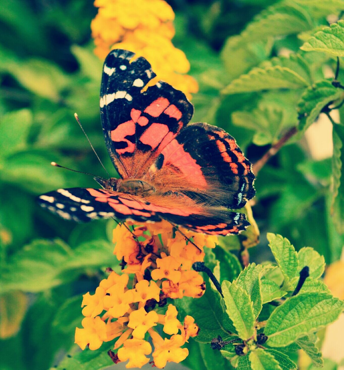 animals in the wild, insect, animal themes, one animal, plant, nature, butterfly - insect, leaf, close-up, wildlife, beauty in nature, animal wildlife, outdoors, growth, flower, no people, day, focus on foreground, fragility, pollination, freshness, perching, flower head
