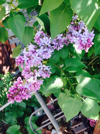 Nature Flowers Summer