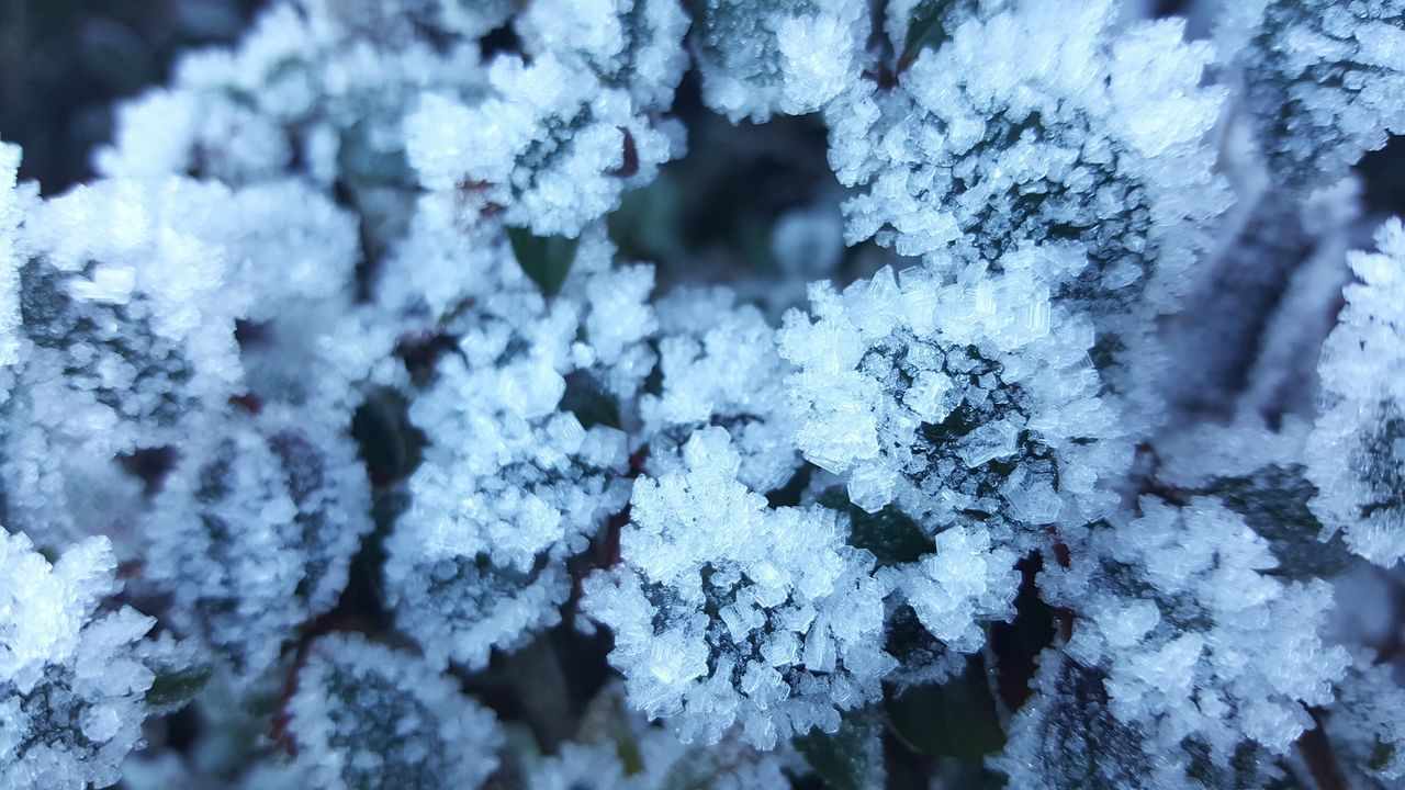Blue Day Nature Close-up No People Focus On Foreground Rural Scene Beauty In Nature Cold Day Outdoor Photography Art Photography Outdoors Card Design Mourning Card Winter_collection Wintertime Winter Ice Cristal Icy Morning Icy Day Icy Flowers Icy Wonderland Icy Leafs Detail