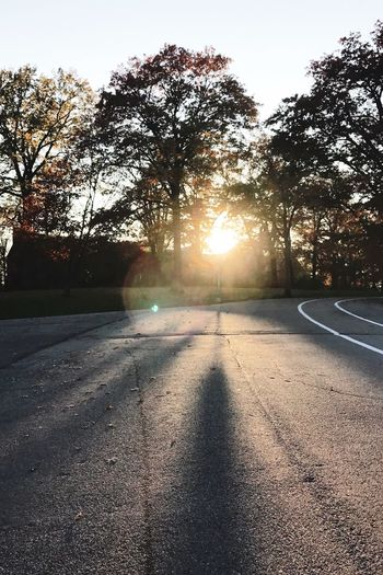 Tree Sunlight Sunset Outdoors Road Sun Nature No People Sky Beauty In Nature Day Sun Flare