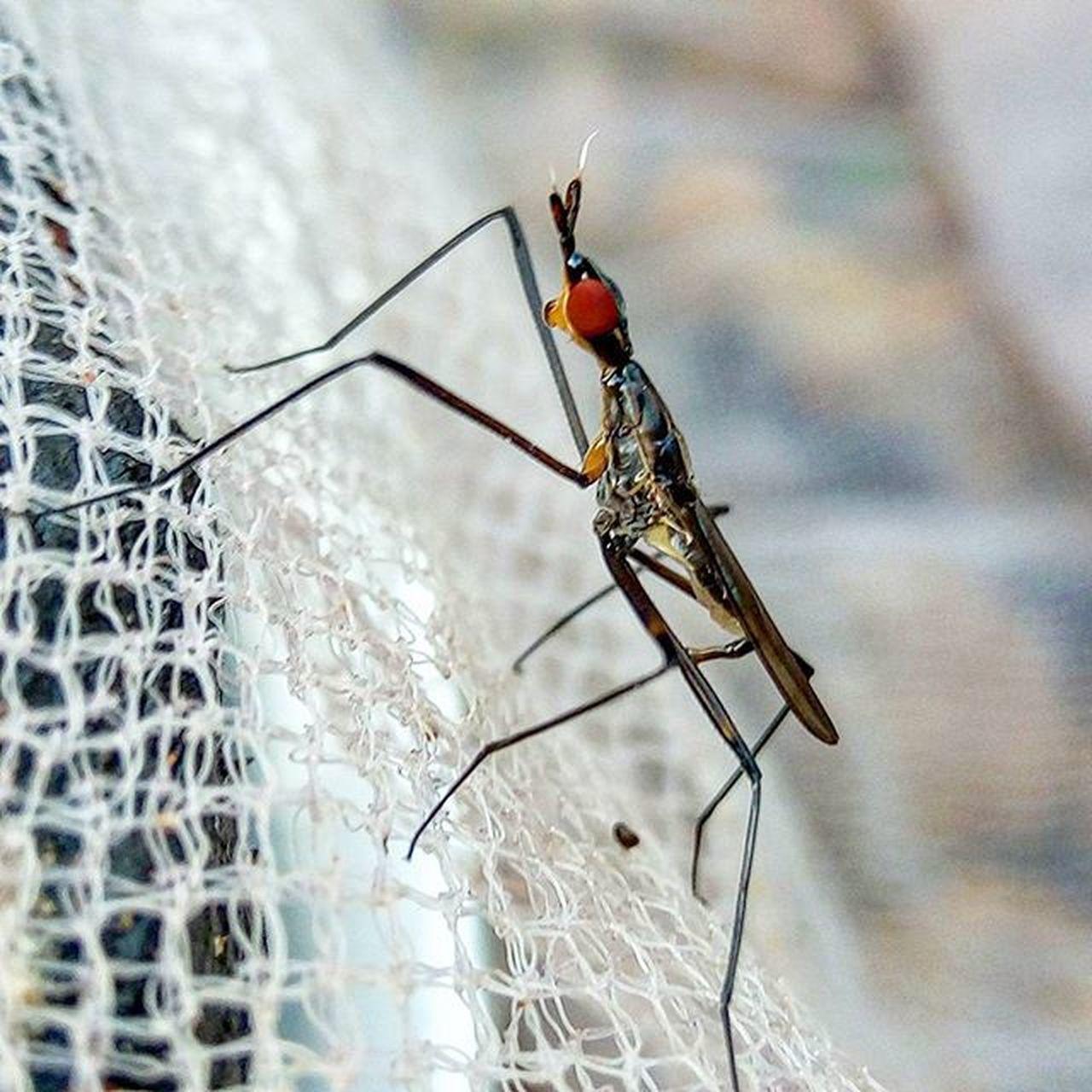 Nature Macro Photography Gioneeshutterbug Insect Bug Shotwithgionee Kerala Kottayam Nofilter Mobilephotography