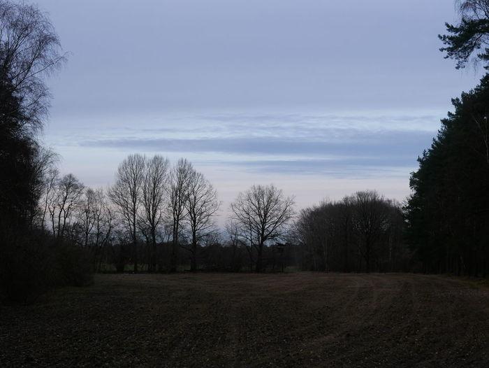 Tree Cloud - Sky Nature Sky No People Landscape Outdoors Day Eveninglight Light Clouds Evening Sky Nature