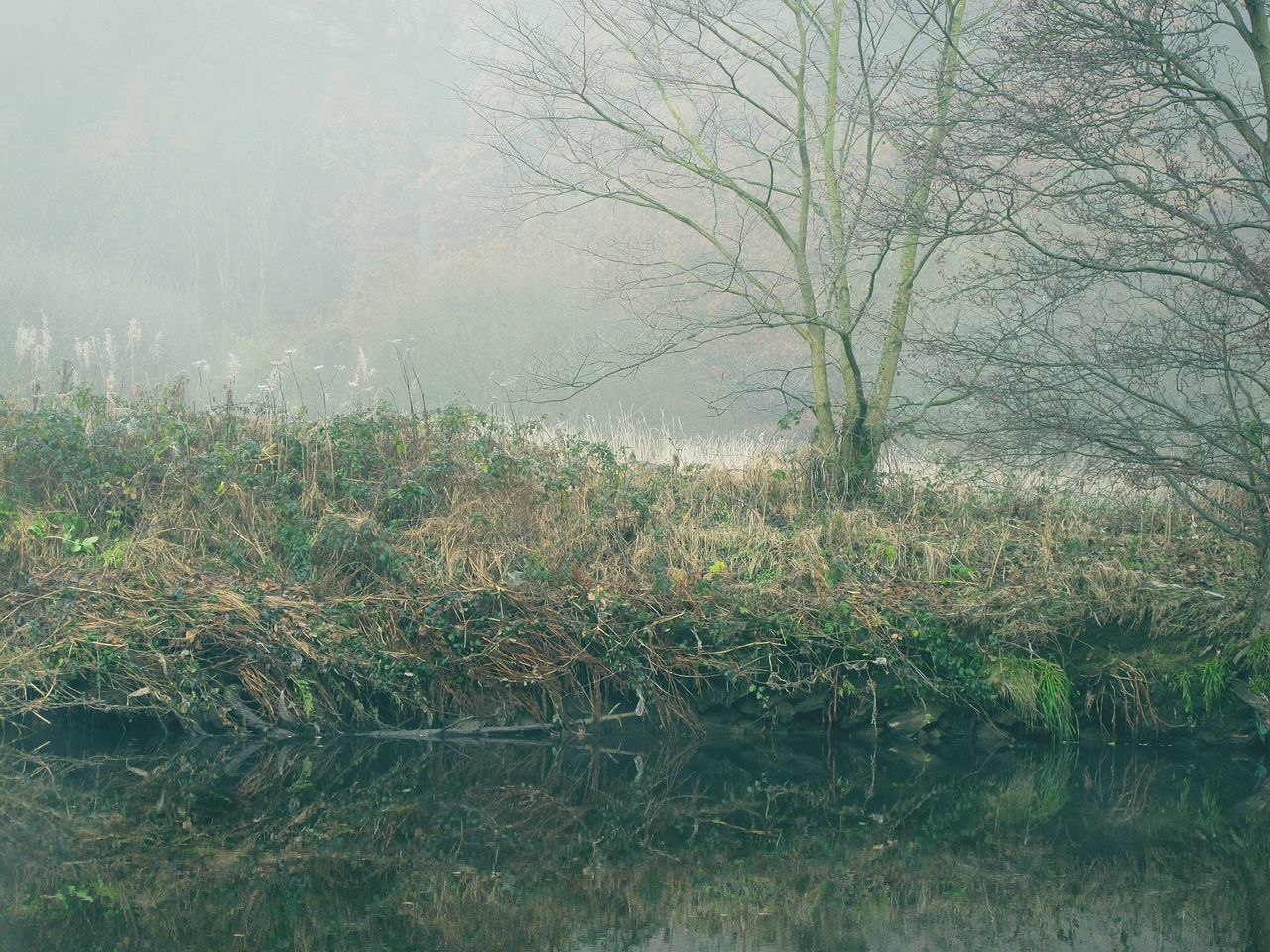 Foggymornings Frosty Days EyeEmbestshots Fineartphotography WoodLand Reflection River Bank  Beauty In Nature Bare Tree Outdoors Change Woodlands Valleys Autumnbeauty Autumn Leaves EnchantedForest Tranquil Scene Non-urban Scene Cold Temperature Tree Trunk Winter Is Coming No People Water Scenics Landscape Rural Scene