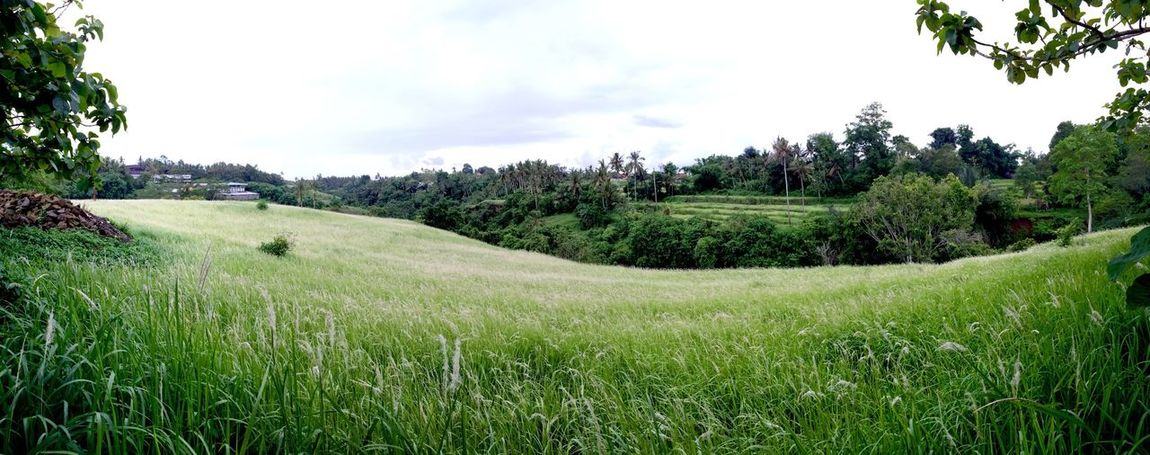 Its been awhile since I've been here.. and this place looks super stunning today. Happy new year everyone! EyeEm Nature Lover Green Bali Nature Sukawati