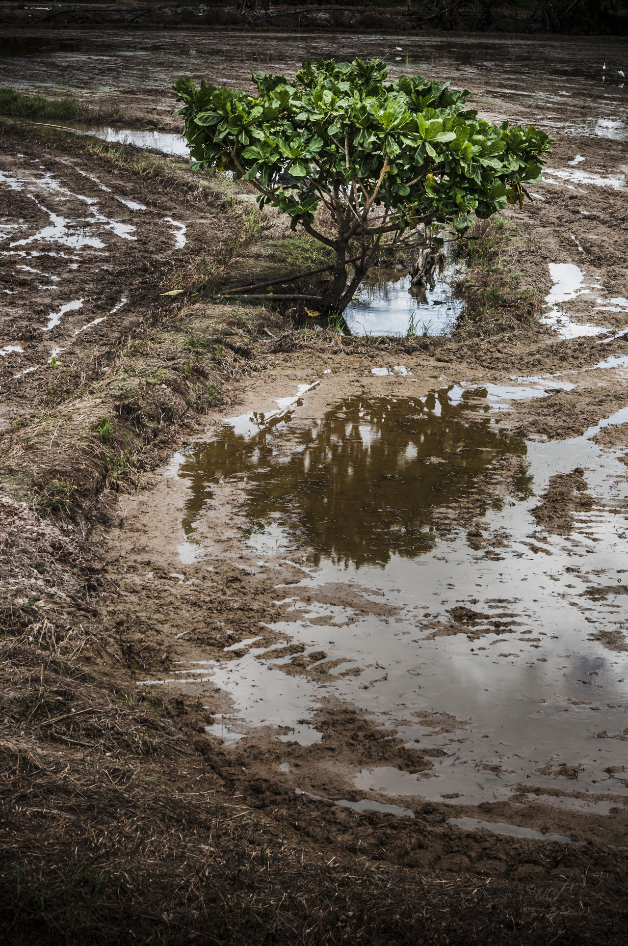 Beauty In Nature Calm Curves Field Ground Landscapes With WhiteWall Lines Nature Reflection Scenics Soil Tranquil Scene Tranquility Tree Water