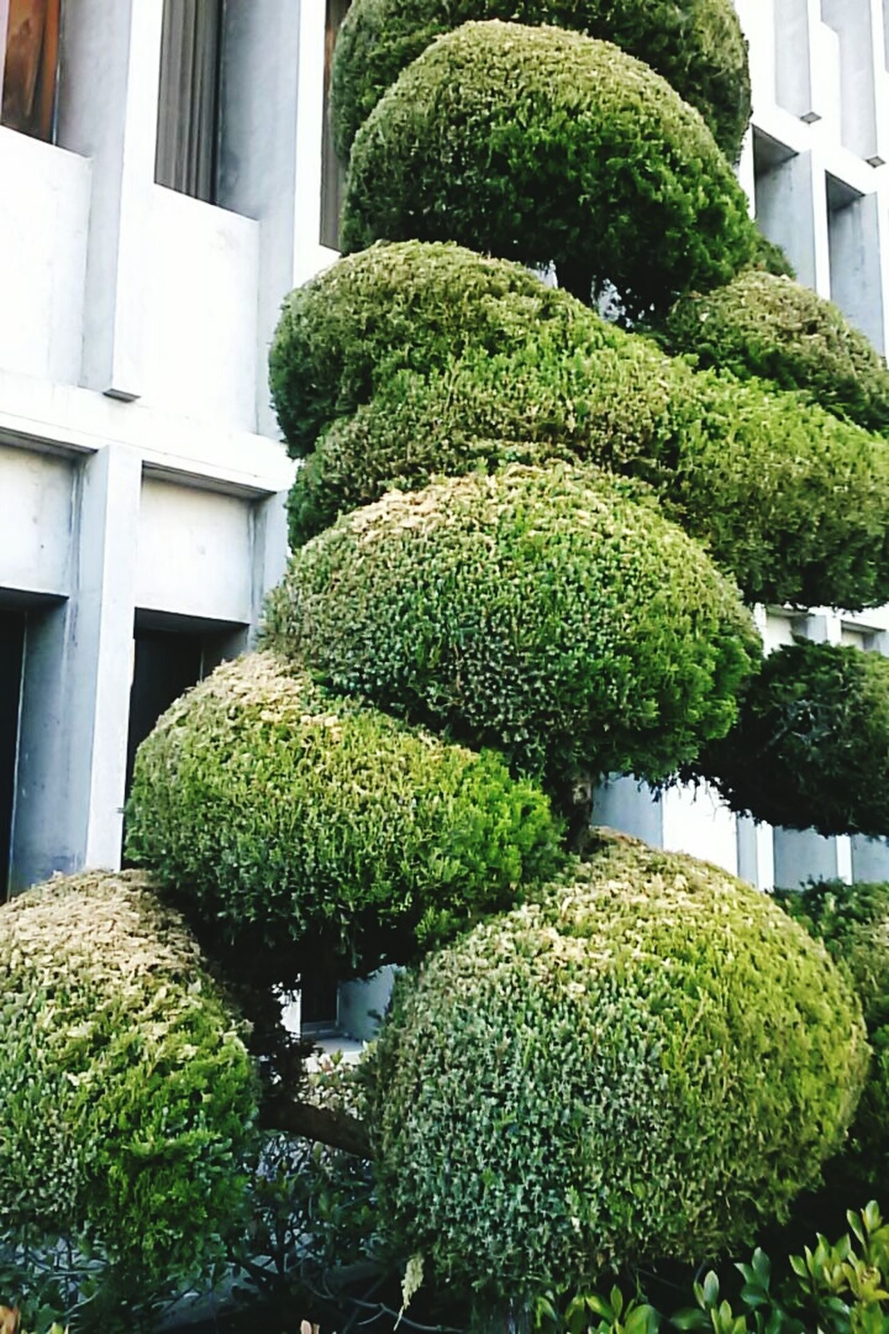 Topiary San Francisco California Norcal Lovemycali