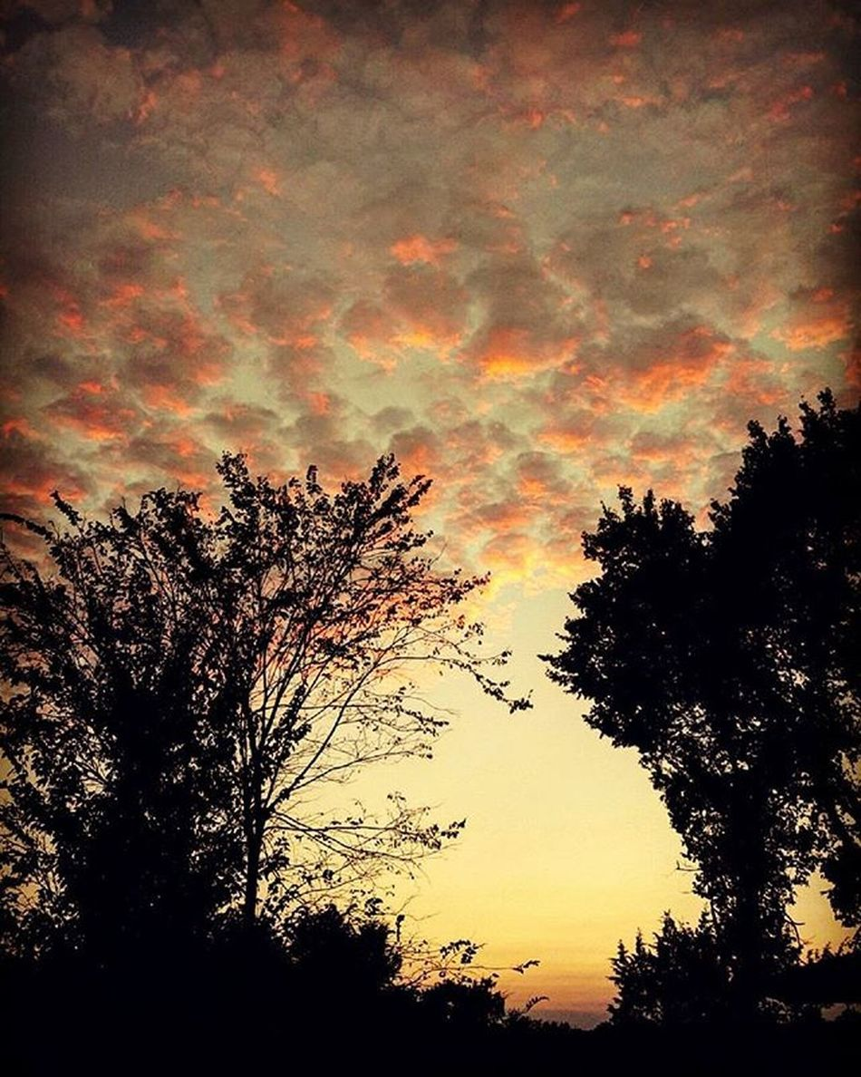 Sky Clouds Vineyard Winery Wine Illinois Southernillinois Nature Sunset Cobden Winetrail October Fall Withfriends Local Carbondale Foodanddrink Spirits Worldfoodday Worldfoodday2015 Friday Fun Happy