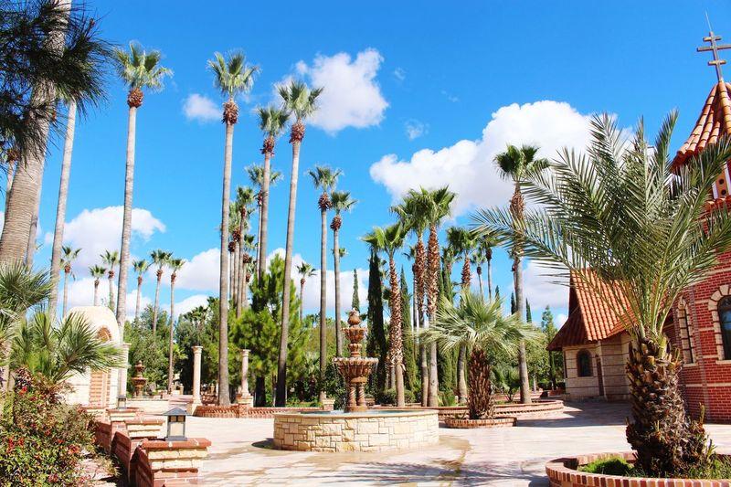 Monastery vibes Palm Tree Beauty In Nature No People Architecture Outdoors Sunlight Arizona Desert Nature