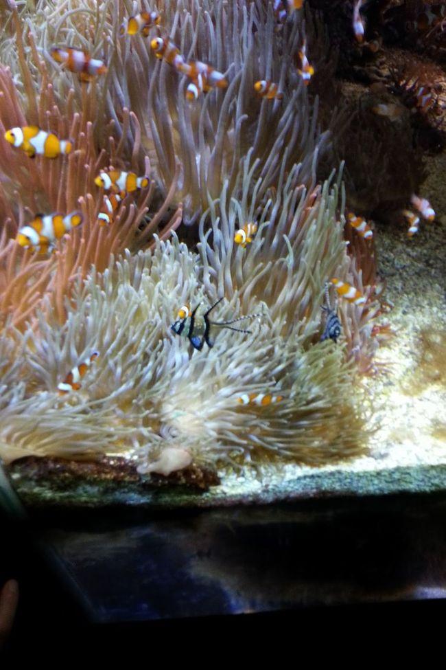 Aquarium Monaco Fish Eye For Photography Eye Em Best Shots