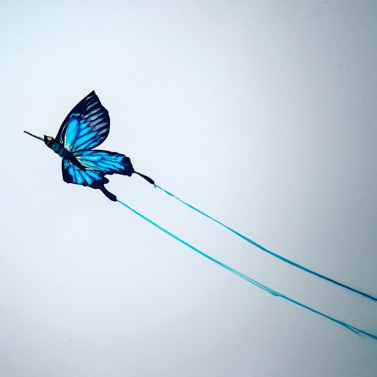 Copy Space Flying Clear Sky No People Spread Wings Butterfly Abstract Minimal