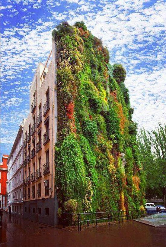 Architecture Paseo Del Prado Jardin Vertical España🇪🇸 Madrid Spain HuaweiP9 Probando EyeEm Edificios Y Fachadas Built Structure Building Exterior Green Color Growth No People Multi Colored Tree Ivy Day Sky Nature City Outdoors Beauty In Nature Water