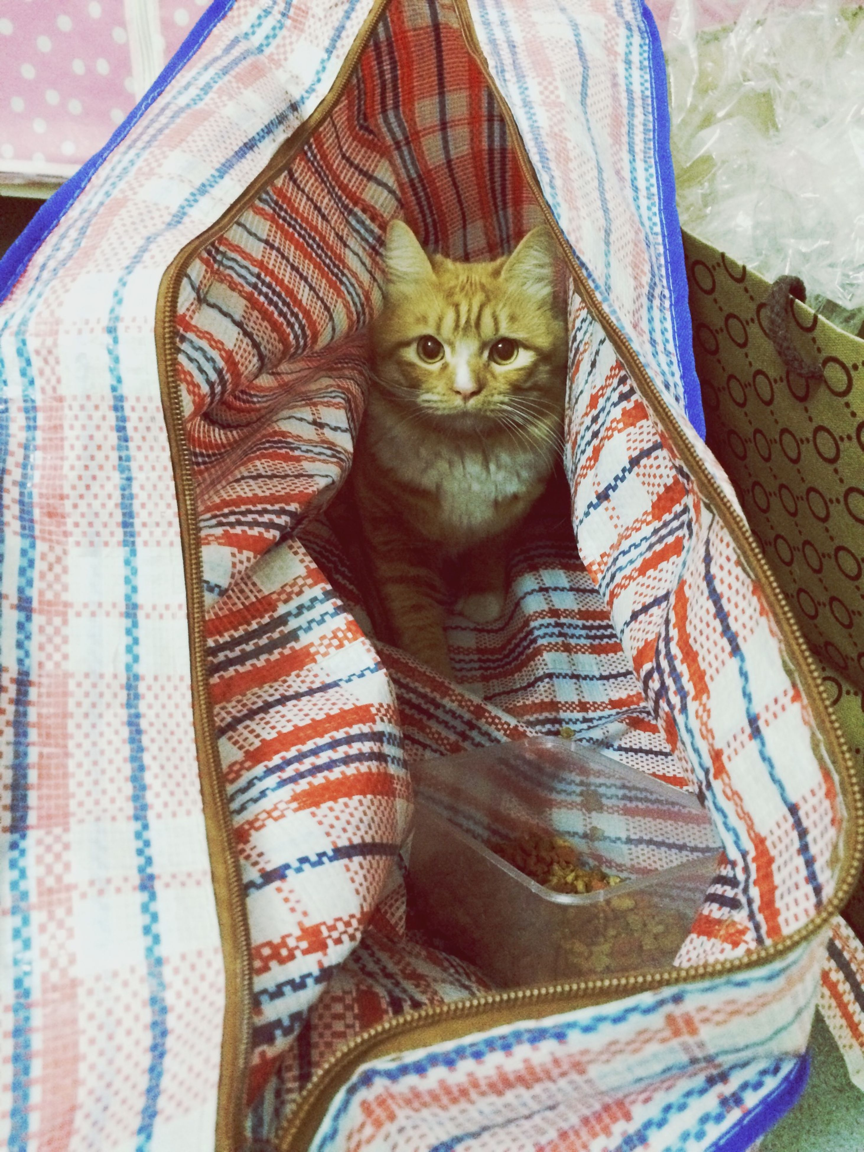 indoors, domestic cat, one animal, animal themes, domestic animals, bed, cat, pets, feline, relaxation, mammal, portrait, textile, fabric, blanket, looking at camera, sheet, resting, whisker, close-up