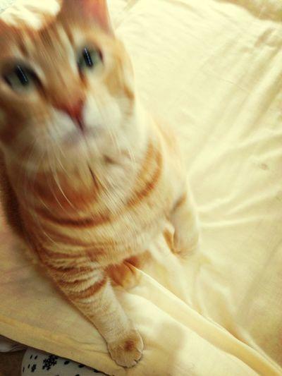 Boku Cat Staring.. ...!!?