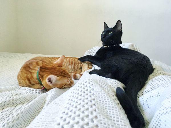 B&O Yellowcat BLackCat Bestfriend Brothers Pets