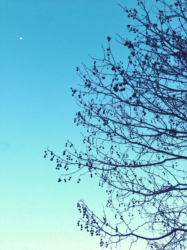 Moon , Trees And Blue Sky . Nature Is wonderful.