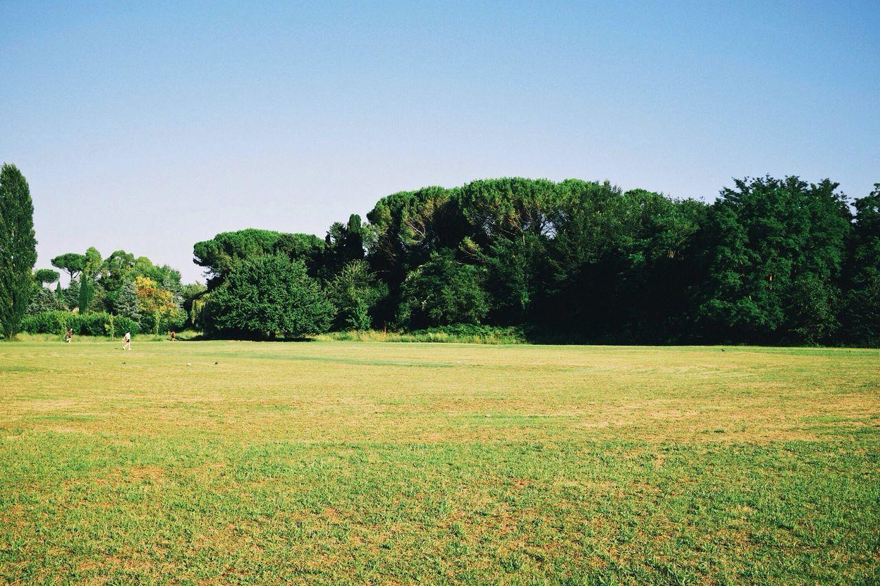 Green Field - VSCO Vscocam Green Fields Parks