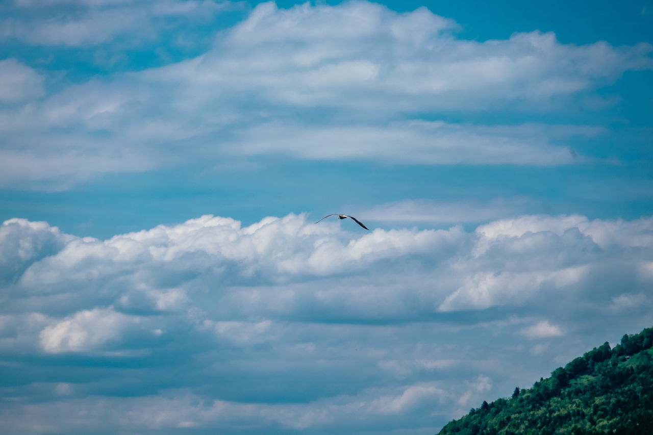 Animal Themes Animal Wildlife Animals In The Wild Beauty In Nature Bird Cloud - Sky Day Flying Nature No People One Animal Outdoors Scenics Sky Spread Wings