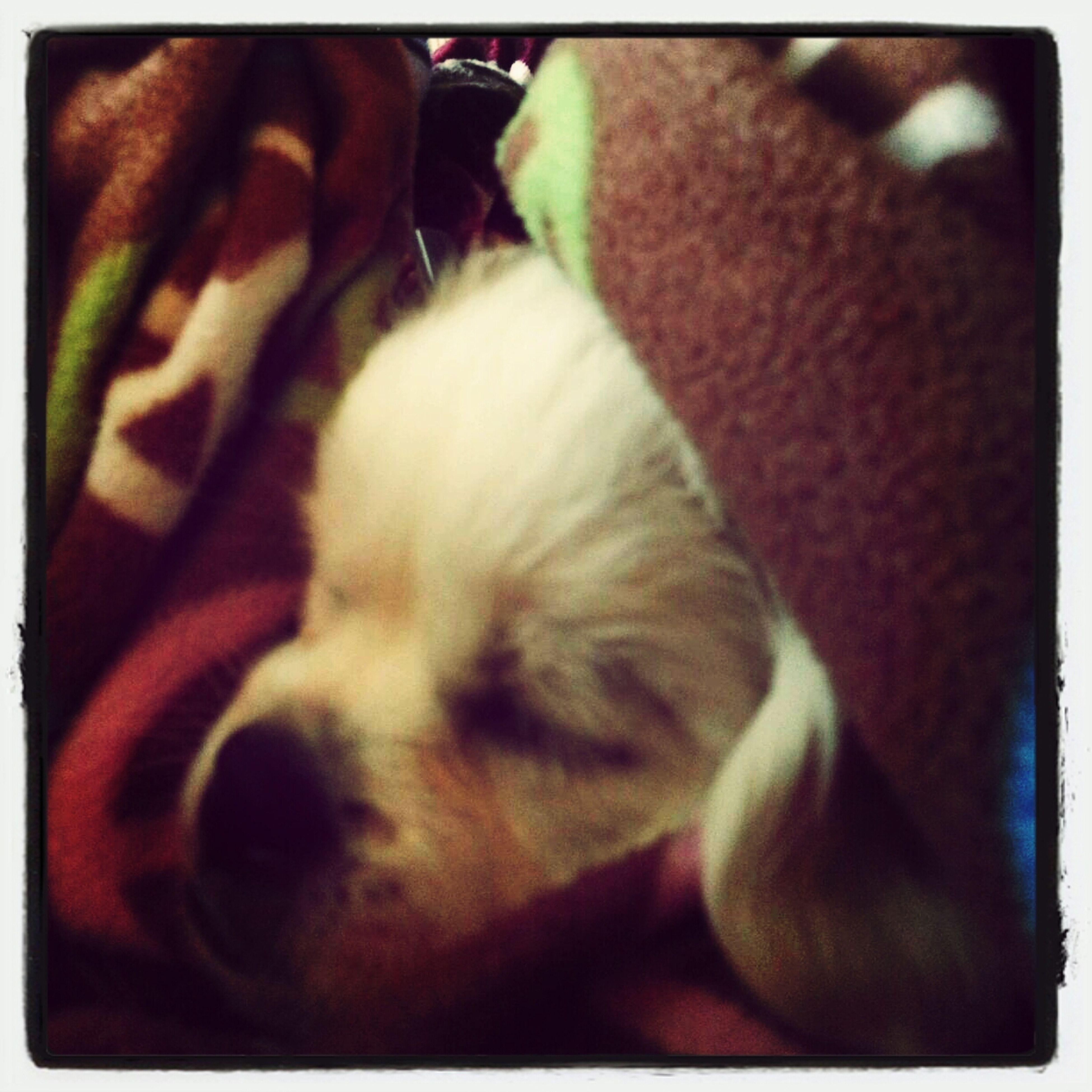 sleepy baby Couchpotato