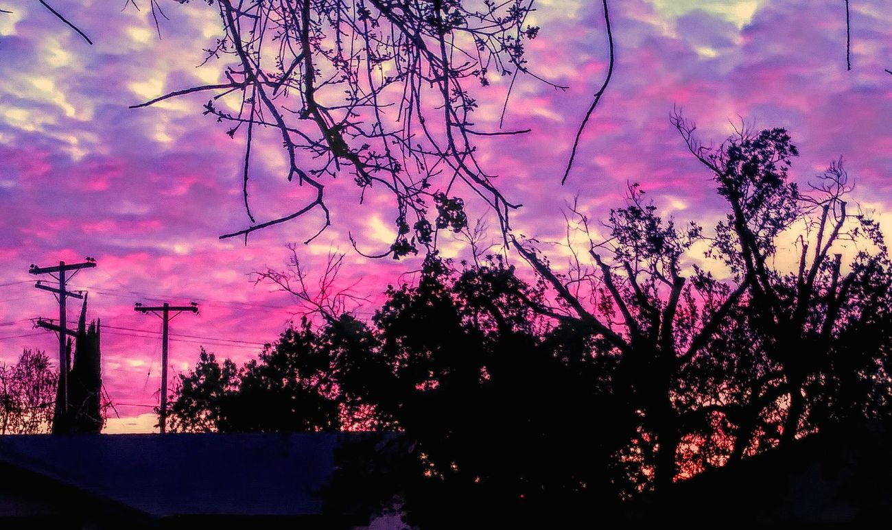 Tree Sunset Silhouette Sky Nature No People Growth Outdoors Beauty In Nature Branch Day
