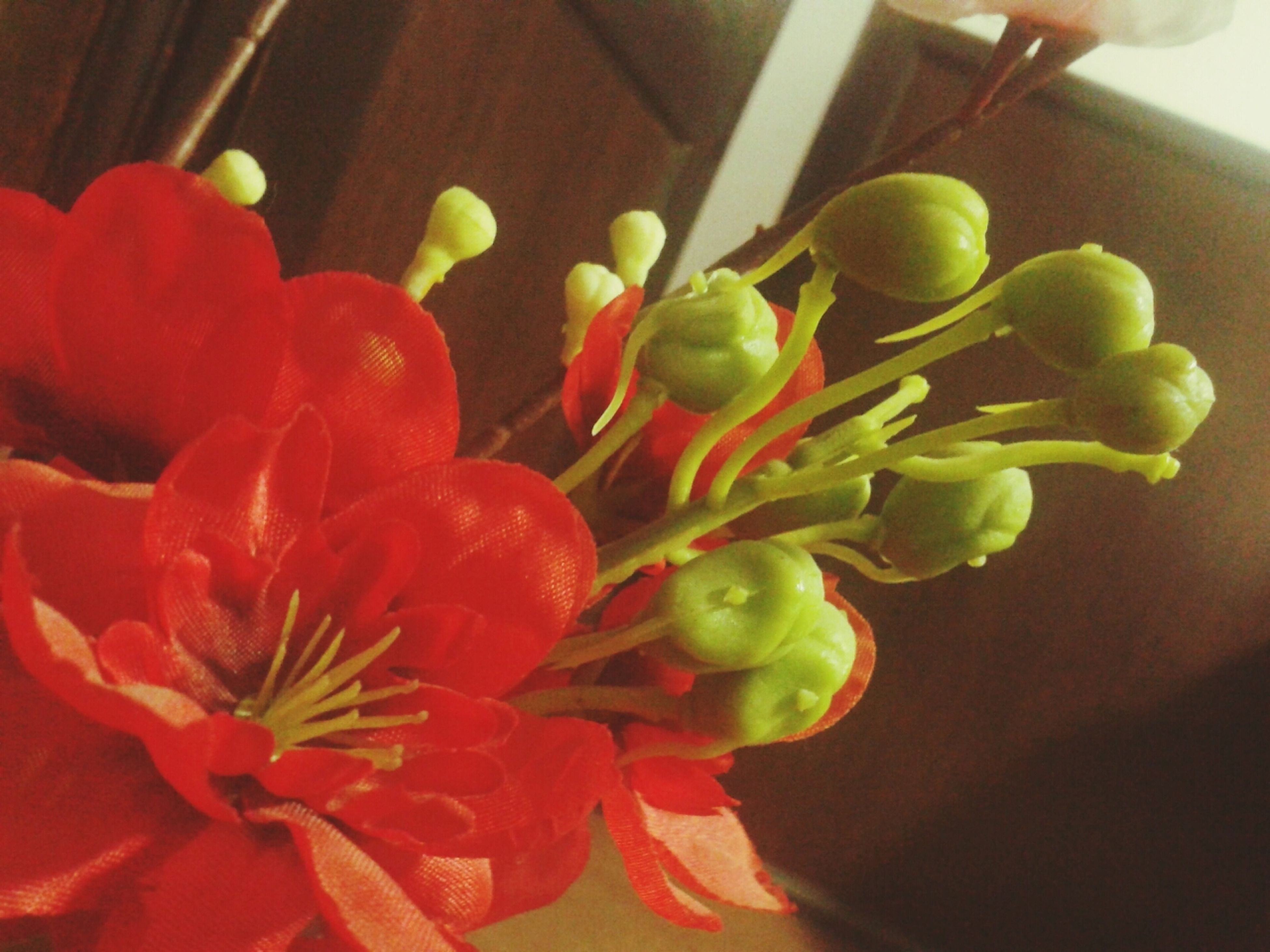 indoors, flower, petal, freshness, home interior, fragility, close-up, vase, red, decoration, flower head, table, no people, plant, growth, pink color, nature, beauty in nature, focus on foreground, high angle view