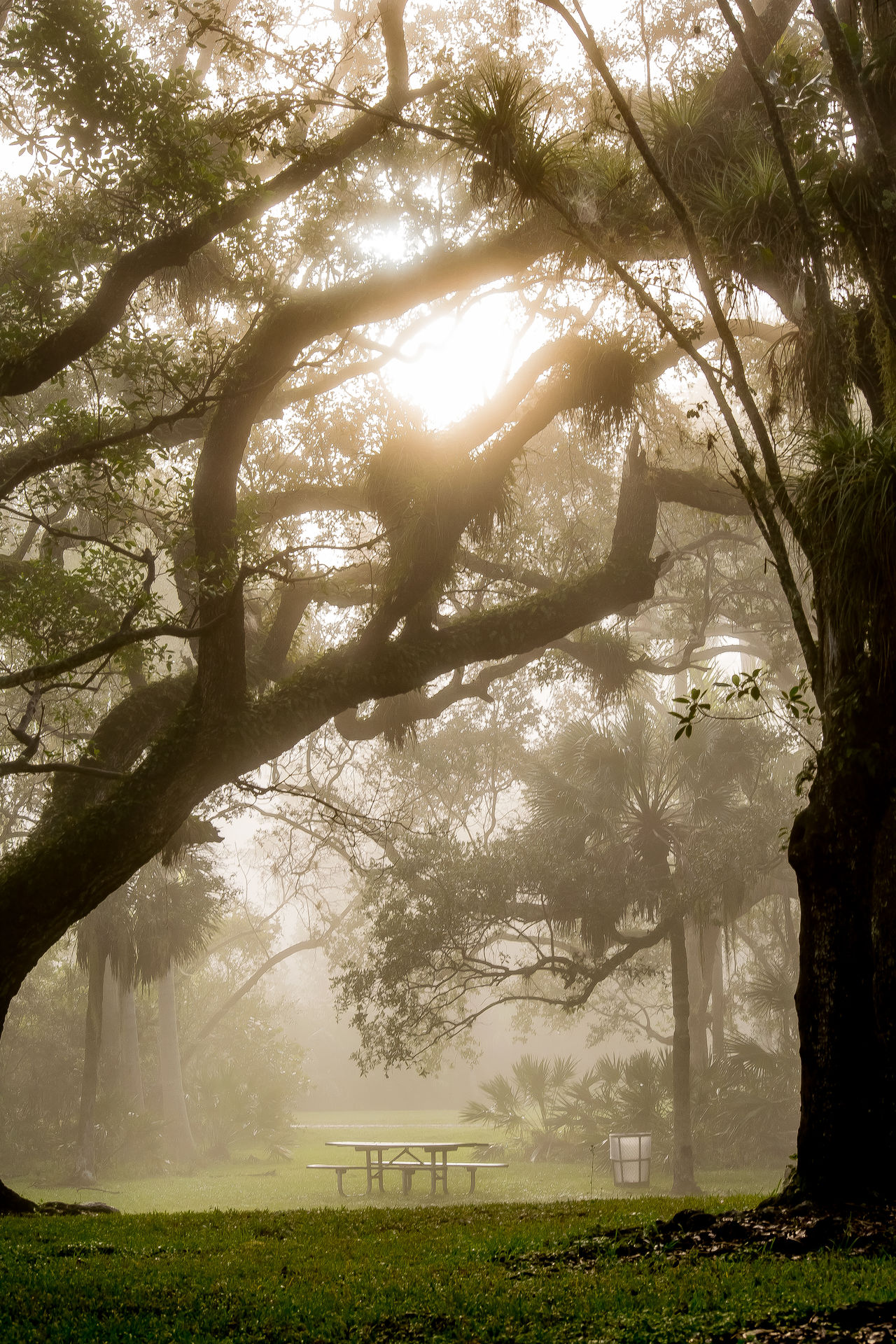 Beautiful Beauty In Nature Bench Day Fog Foggy Grass Landscape Landscape_Collection Landscape Photography Nature Nature Nature Photography Nature Collection No People Outdoors Park Sky Sunlight Sunrise Sunshine Tranquility Tree Tree Trunk Wonderful Let's Go. Together.