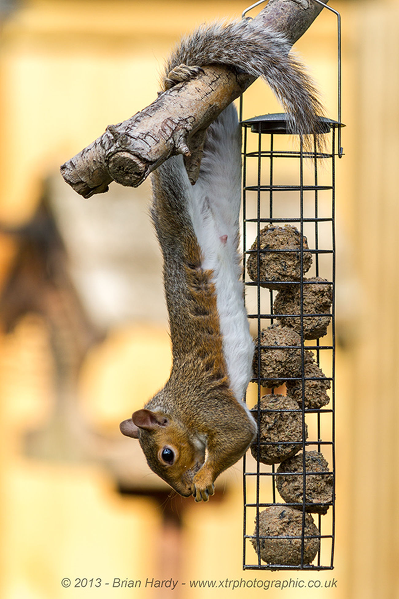Feeding Time. Animal Wildlife Nature One Animal Outdoors Squirrel