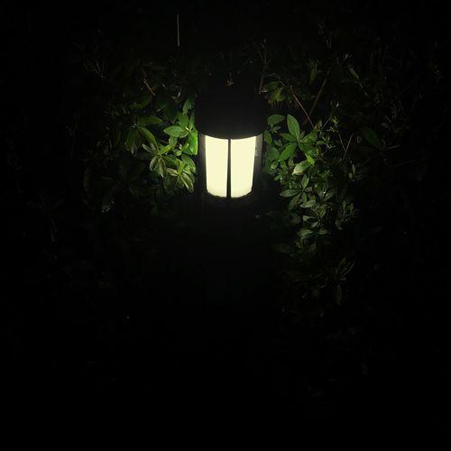 A Mysterious Lamp💡 Rain Night