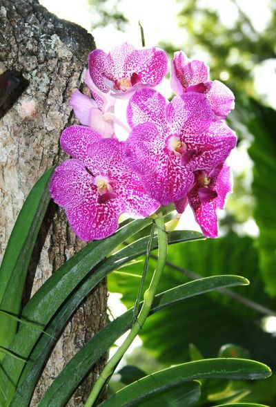 Orchid Flower Plant Flower Outdoors Growth Beauty In Nature Close-up Orchids In Bloom Phalaenopsis Darkpink
