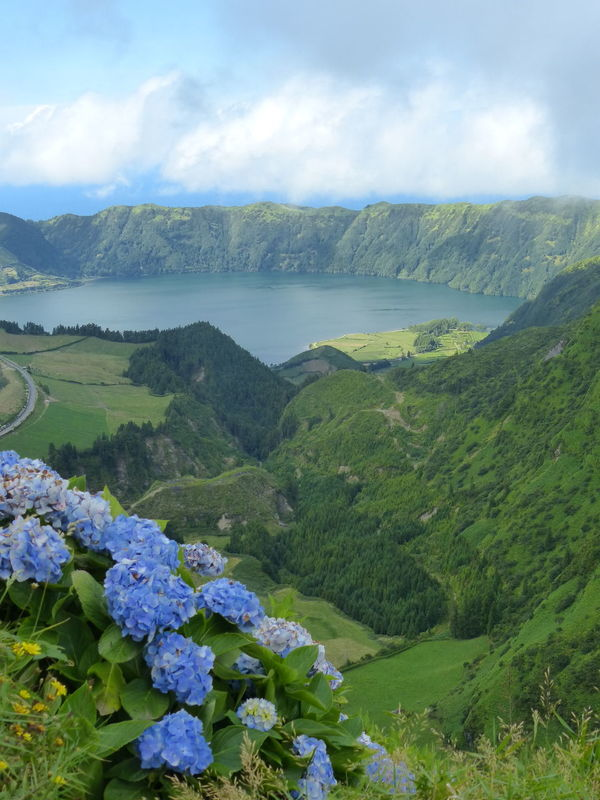 Sao Miguel- Azores Water Tranquil Scene Scenics Beauty In Nature Mountain Tranquility Lake Flower Nature Non-urban Scene Fragility Cloud - Sky Growth Freshness Green Color Sky Day Outdoors Green Geology Azores Islands Portugal Hortensia Vulcanic Lake
