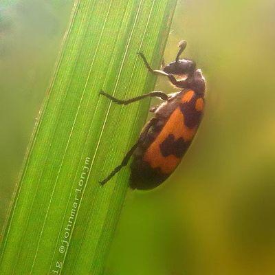 Pray Instagramers Insect Instagood INDONESIA Macro_perfection Macroclique Nature Naturelovers Recentforrecent Red Top_macro