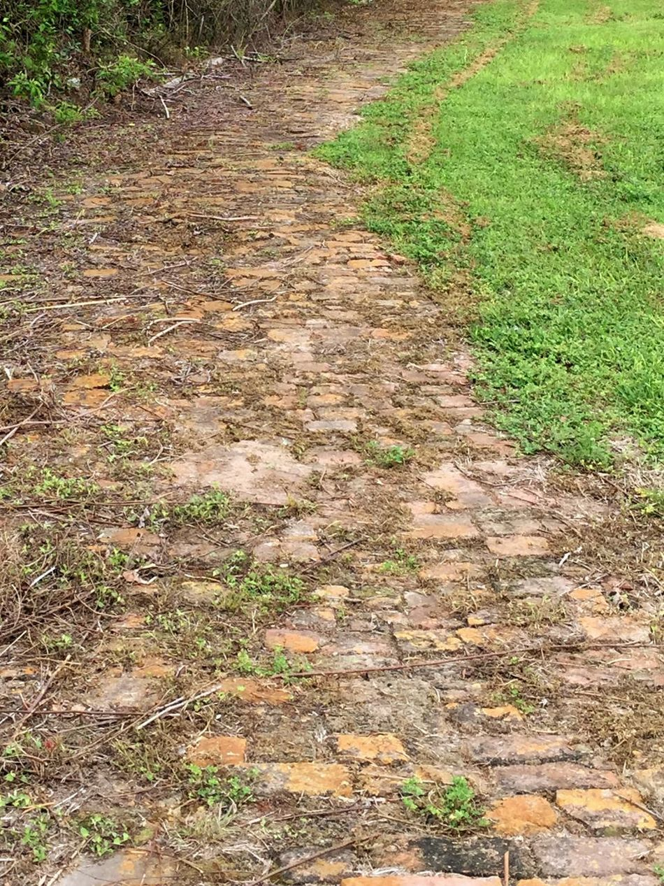 Green On Brown Abner Jackson Plantation