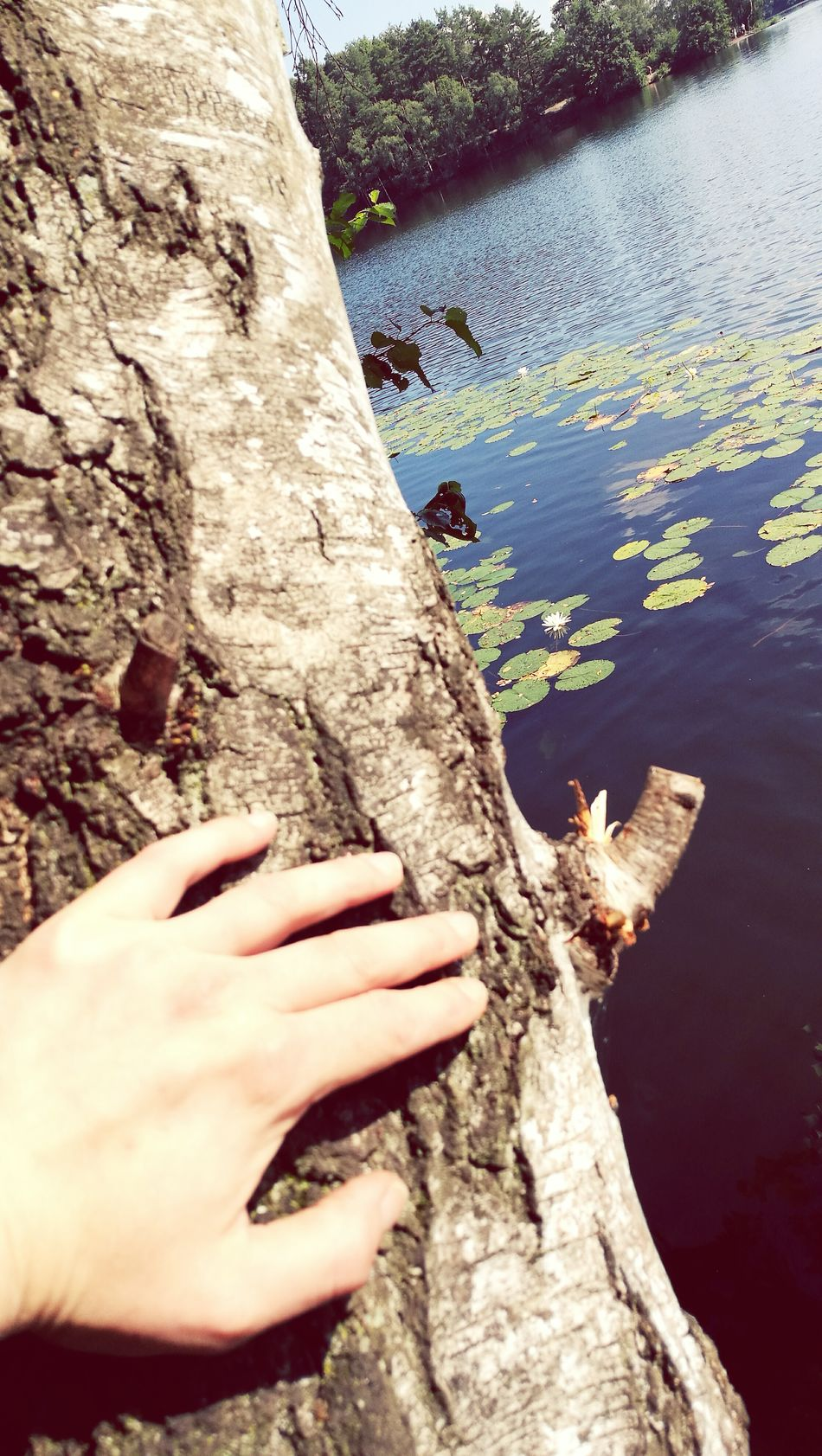 Water Lake High Angle View Tree Trunk River Tranquility Nature Personal Perspective Swimming Person Outdoors Non-urban Scene Person Tranquil Scene