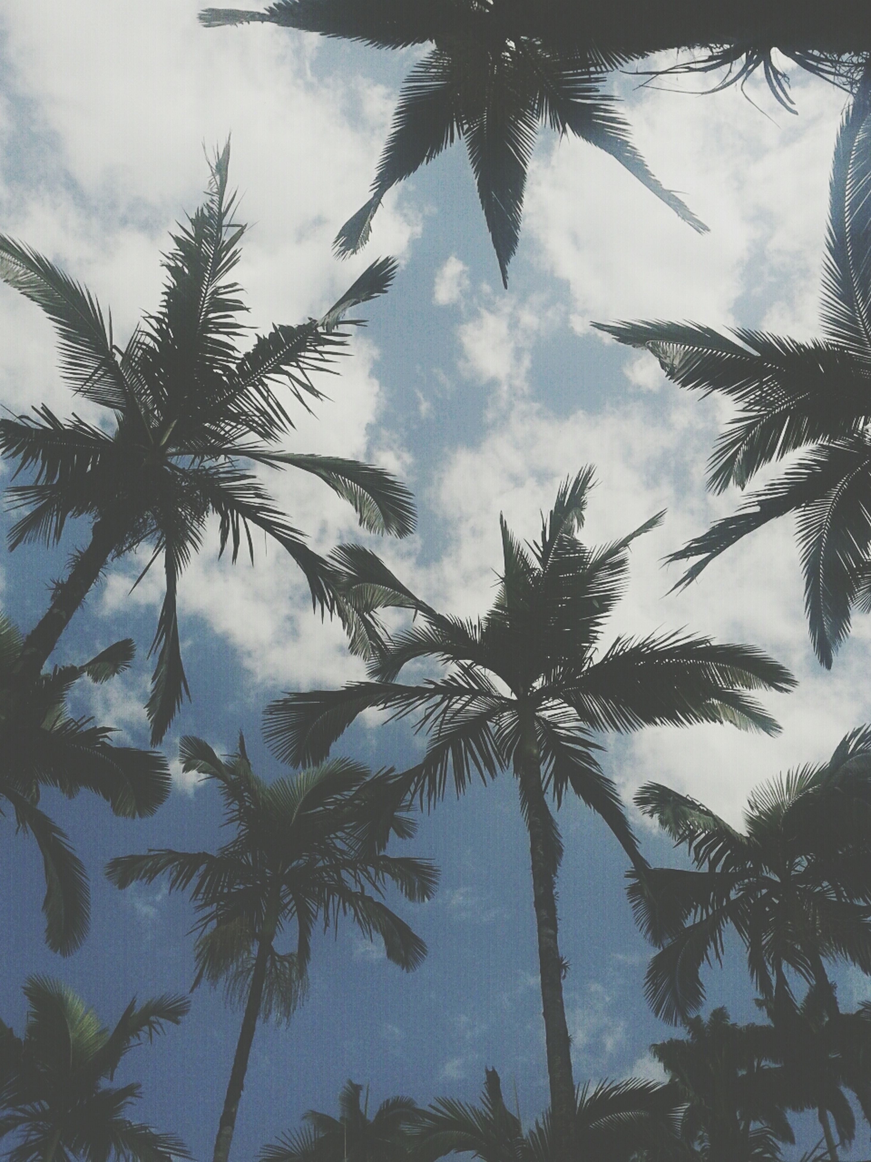 tree, sky, palm tree, low angle view, cloud - sky, tranquility, growth, nature, beauty in nature, branch, scenics, tranquil scene, cloud, silhouette, cloudy, outdoors, water, day, no people, leaf