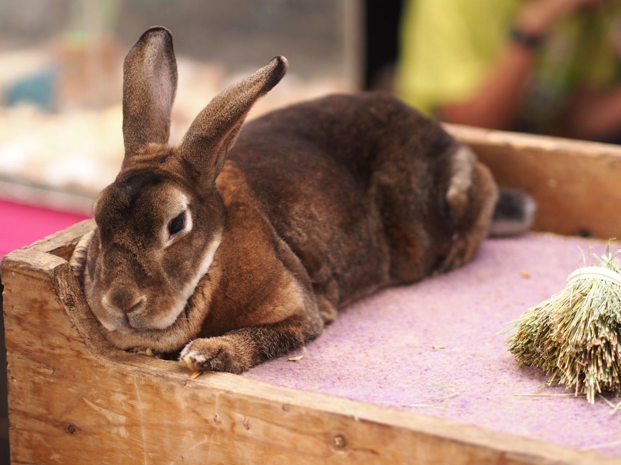 Rabbit ❤️ Rabbit 🐇 Animal Themes Mammal Relaxation Domestic Animals Sleeping One Animal No People Pets Indoors  Day Antler Rabit