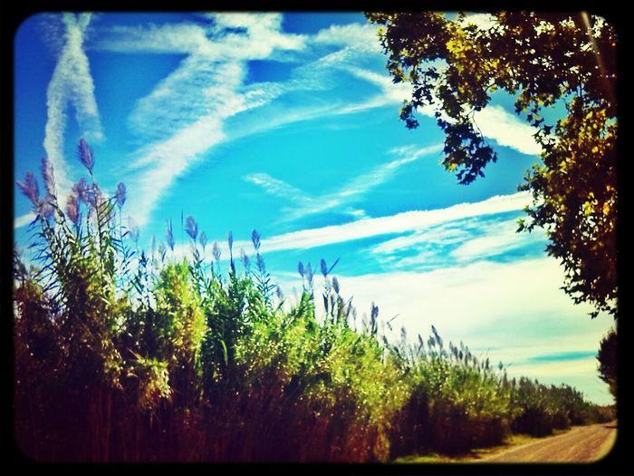 Me encantan los paseos al sol..como esos domingos de invierno que sales a caminar y disfrutas de ese cielo claro y fresco..placeres de la vida que redescubres de mayor..feliz dia! Barcelona Nature_collection Enjoying The Sun Trekking