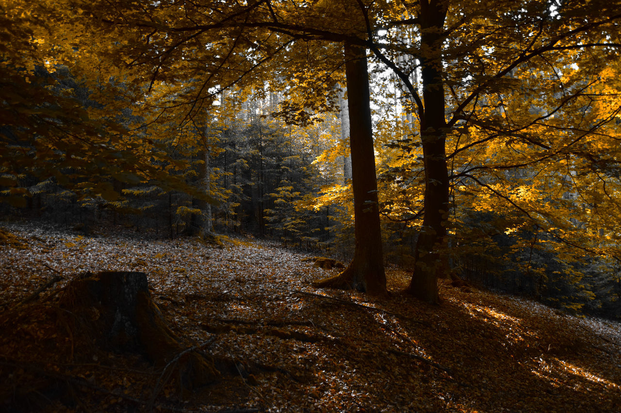 Autumn Beauty In Nature Branch Day Forest Leaf Nature No People Outdoors Scenics Tranquil Scene Tranquility Tree
