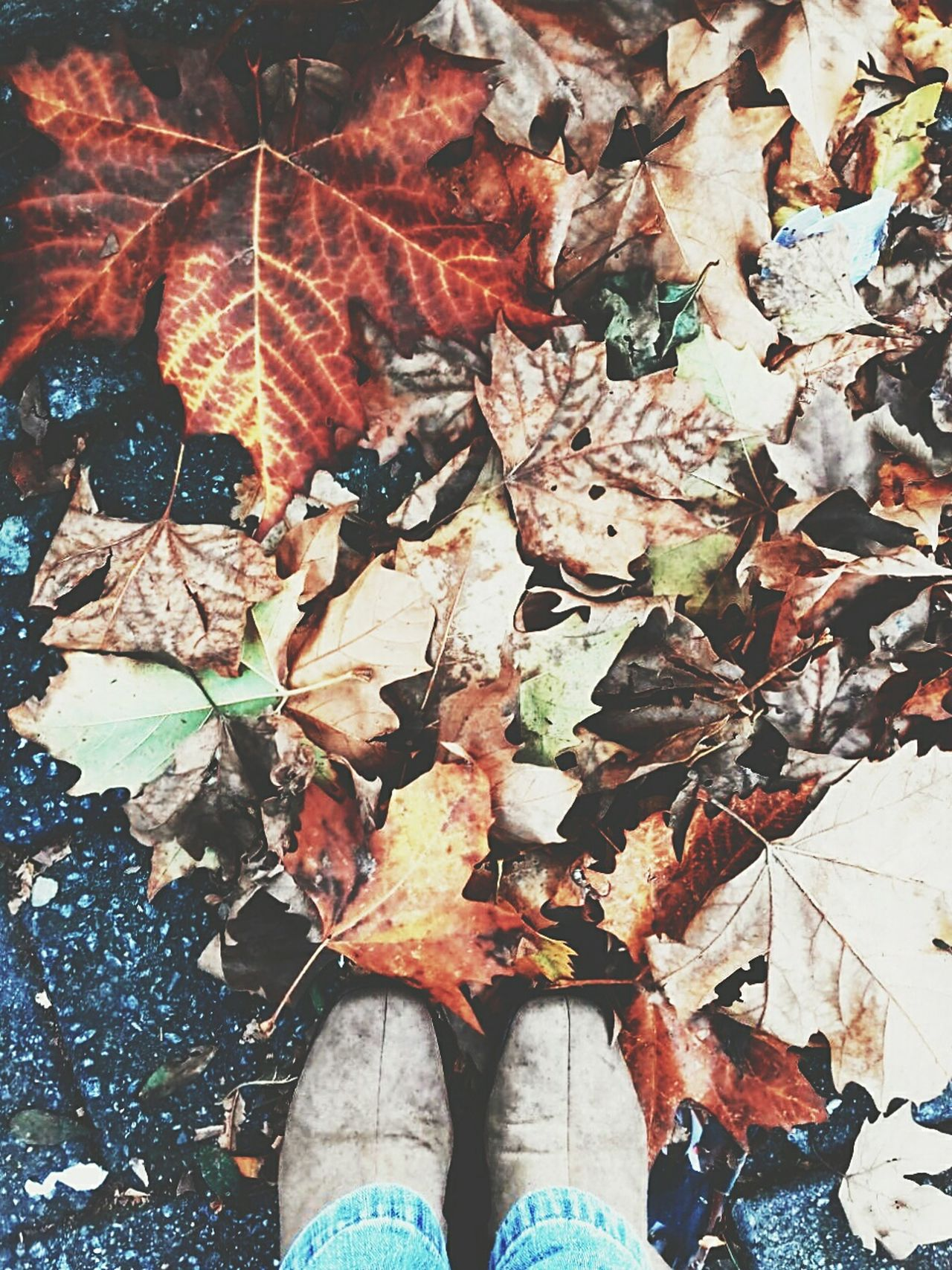 Leaf Autumn Low Section Day Nature Real People Human Body Part Fragility Street Photography Out Of The Box Love Vacations Camposdojordao Platano Platanus EyeEmNewHere