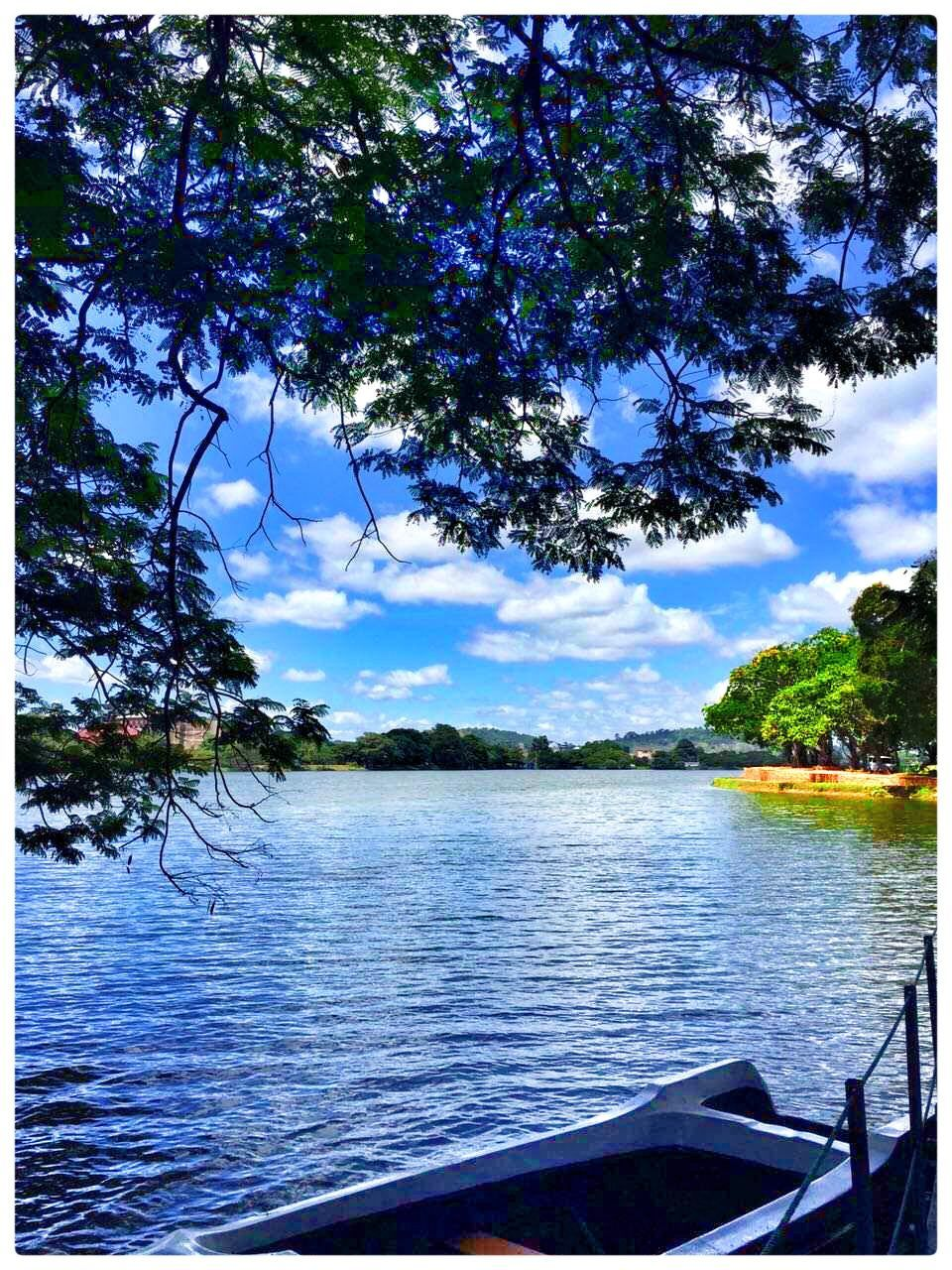 tree, nature, tranquility, water, beauty in nature, no people, tranquil scene, scenics, sky, day, outdoors, lake, branch, nautical vessel