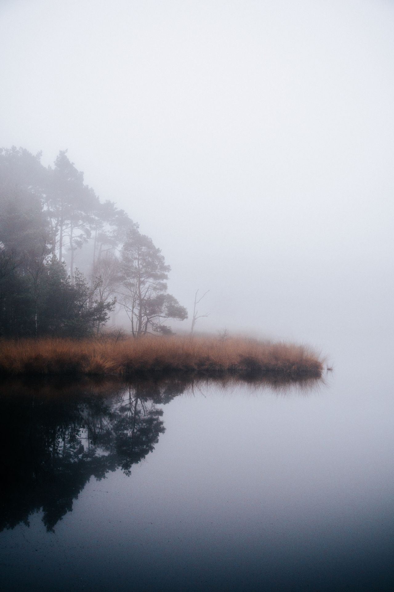 Nature Tranquility Fog Reflection Tranquil Scene Tree Water Hazy  Scenics Beauty In Nature Mist Sky No People Landscape Outdoors Growth Day Hello World EyeEm Nature Lover Nature_collection The Week Of Eyeem Beautiful Check This Out Lake Beauty In Nature