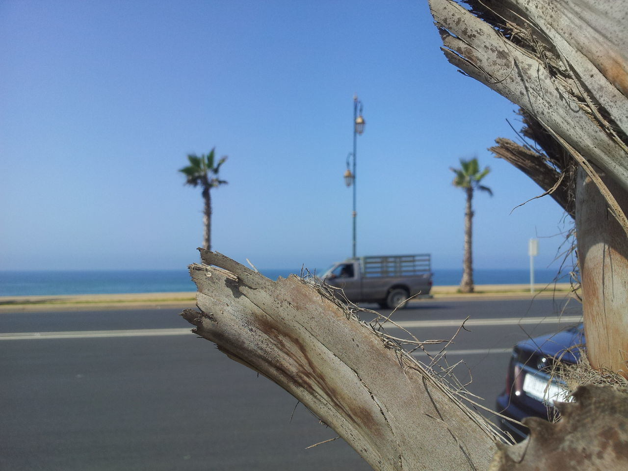transportation, clear sky, day, no people, mode of transport, outdoors, blue, palm tree, nature, beach, sky, close-up