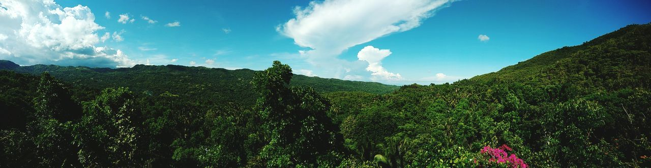 The Great Outdoors - 2017 EyeEm Awards Panoramashot Tea Crop Agriculture Tree Nature Rural Scene Sky Cloud - Sky Beauty In Nature Freshness Growth Landscape No People Outdoors Day Panorama Panoramic Landscape Panoramic Photography