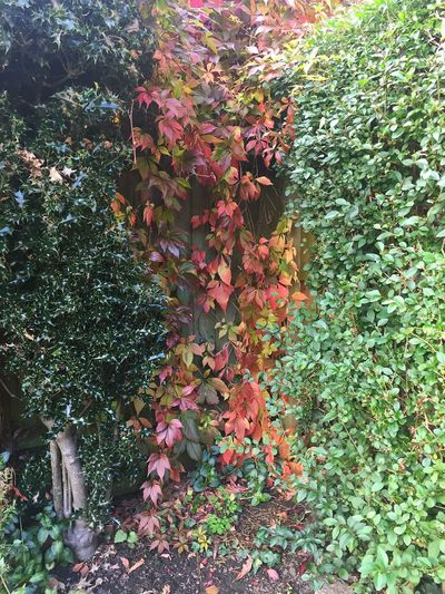 Autumn Autumn Colors Colors Of Autumn Autumn🍁🍁🍁 IPhoneography Photography