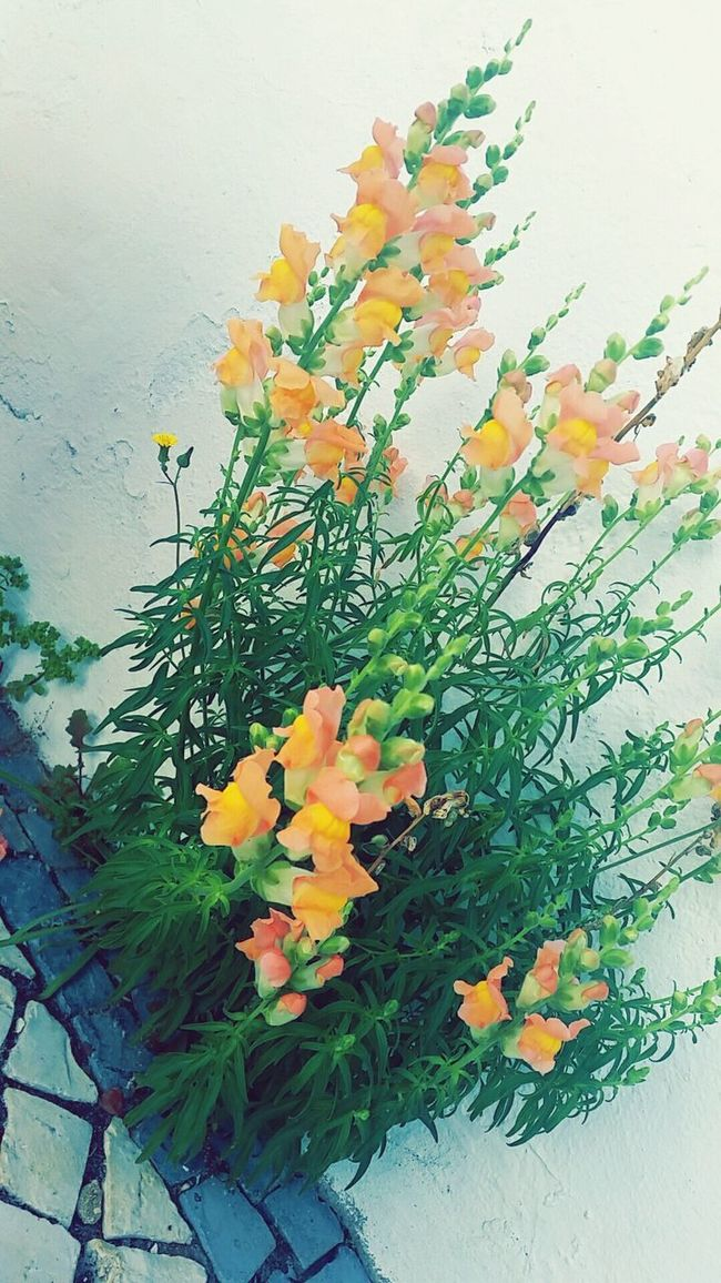 Flowers Flowers,Plants & Garden Colors Wellow Flowers_collection Flowerlovers