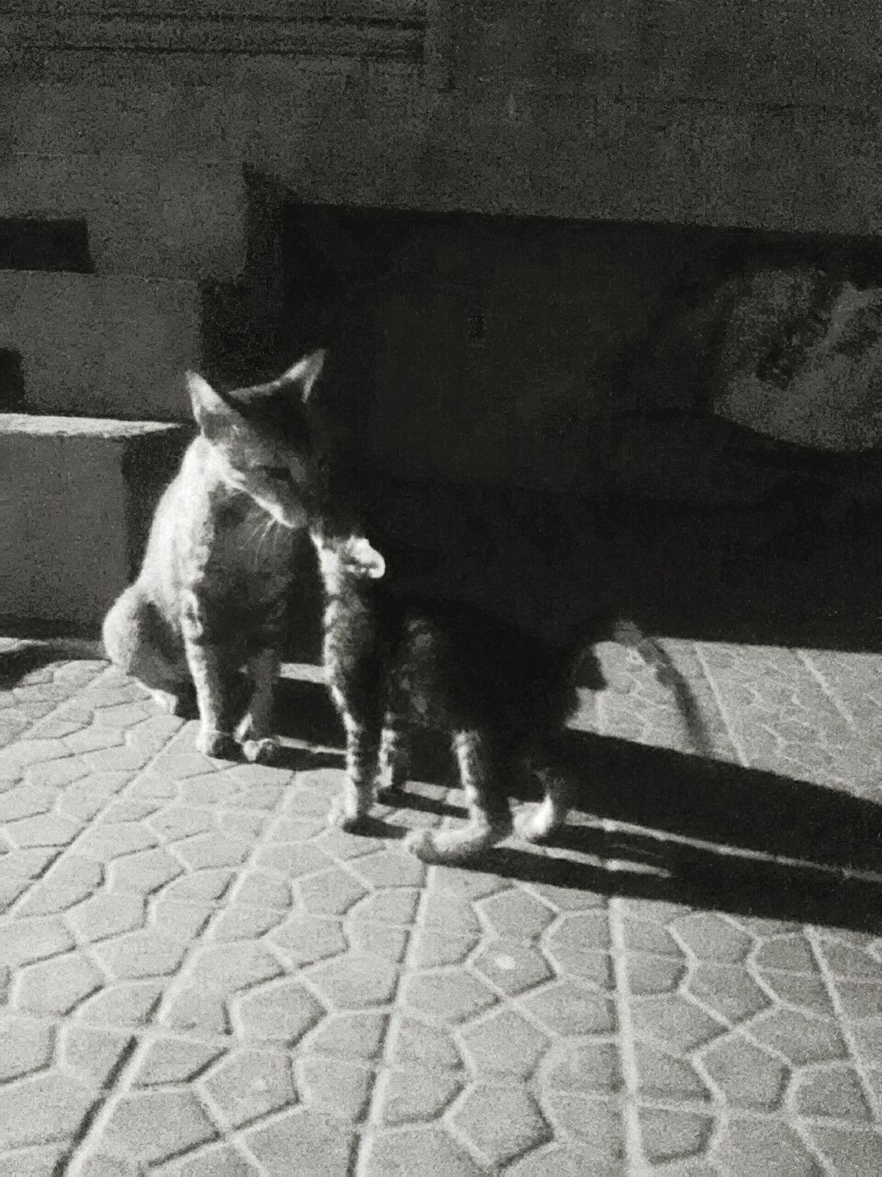 Motherlove Black & White Cats Petlove  Citylife